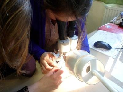 Recherche d'êtres vivants à la loupe binoculaire