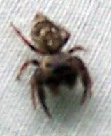 Araignée (de près)