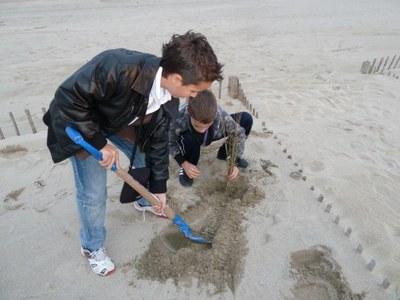 Revégétalisation de la dune du Lido