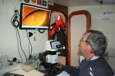 le microscope sur tara