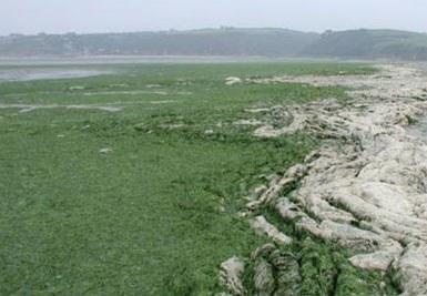Marées vertes en Bretagne