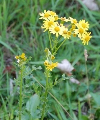 Fleur de la zone d'observation n°2