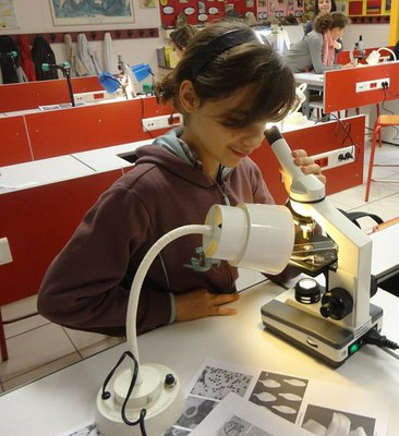 Identification of pollen grains with a microscope