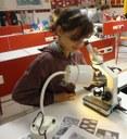 Identification des grains de pollen au microscope