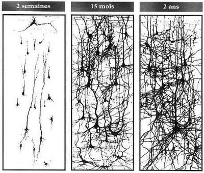 constructionneurone