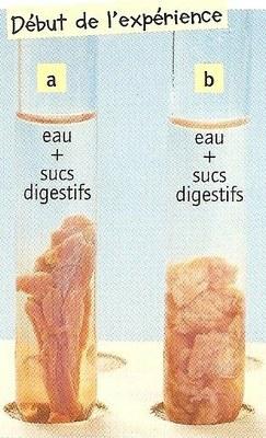 viandesucdigestifto