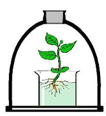 plantesanspotasse