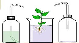 plantesansselmineraux