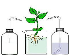 planteselmineraux