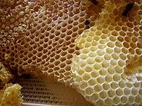200px Honey comb