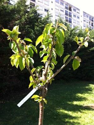 Plantation d 39 arbres fruitiers au coll ge projet v nissieux rh ne - Plantation d arbres synonyme ...