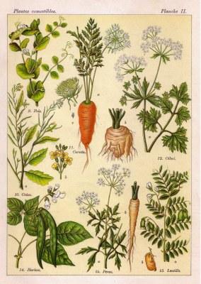 legume02