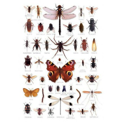 poster insectes