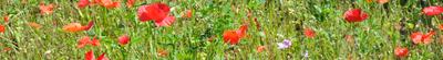 bandeau jardin biodiversité
