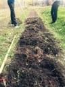 L'aménagement des planches de culture nous a permis de planter 600 plants d'ail.  Nous sommes maintenant autosuffisants dans notre culture d'ail biologique musique et russe.