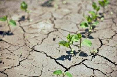 agriculture climat maroc