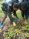 Récolte herbes aromatiques