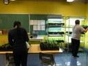 Chaque jour, des élèves sortent les semis des meubles-serre pour les vaporiser.  C'est environ 1200 plantes qu'il faut entretenir avec soin.  Un système de minuterie a été installé pour s'assurer d'avoir un nombre d'heures adéquat de lumière.