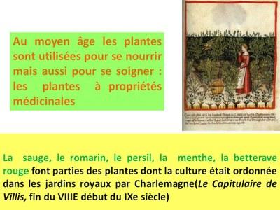 Semaine du goût : Herbes aromatiques et légumes médiévaux (2)
