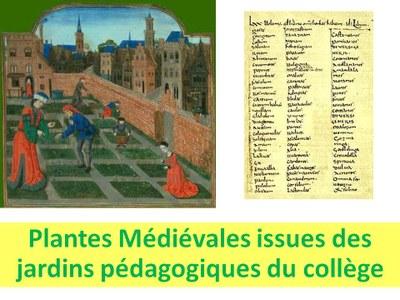 Semaine du goût : Herbes aromatiques et légumes médiévaux