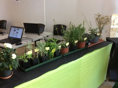 Le jardin médiéval à la fête de la science