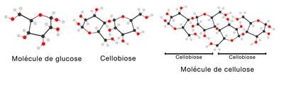cellulose1a